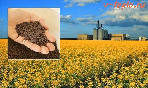 биотопливо из рапса