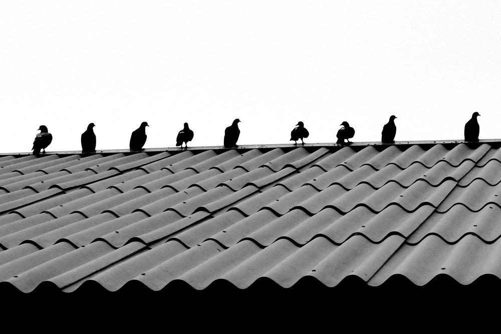 Советы по укладке шифера на крышу